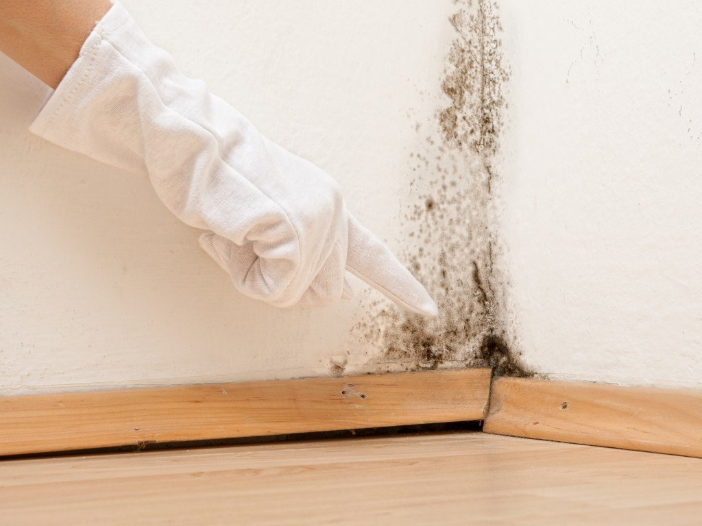 Schimmel Wohnung Entfernen krankheitsfördernd schimmel in der wohnung schnell entfernen oder