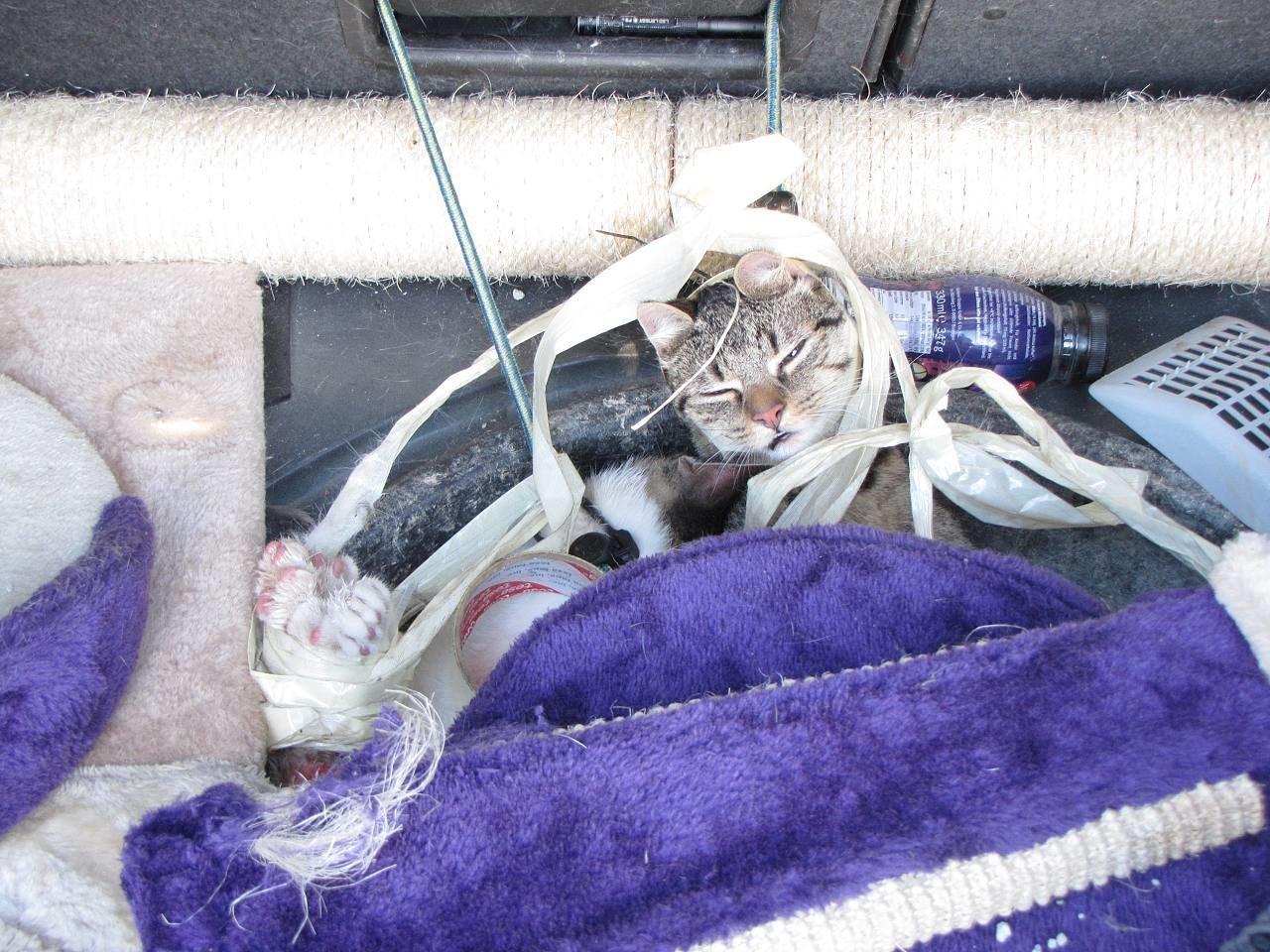 Tierbesitzer angeblich mit Katzen überfordert: Sie wurden