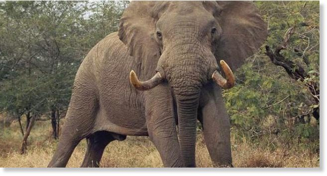weißer elefant ratingen