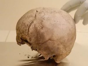 Schädel - Fundort: Ölsund, Hälsingland, Schweden, datiert auf etwa 2,300 v. Chr.,