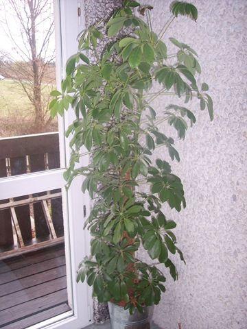 pflanzen im b ro sind gut f r die gesundheit gesundheit wohlbefinden. Black Bedroom Furniture Sets. Home Design Ideas