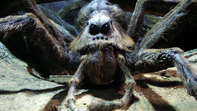 Aragog | Harry Potter Wiki | FANDOM powered by Wikia