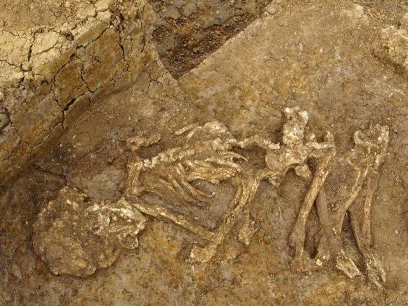 Riesen Skelett Gefunden