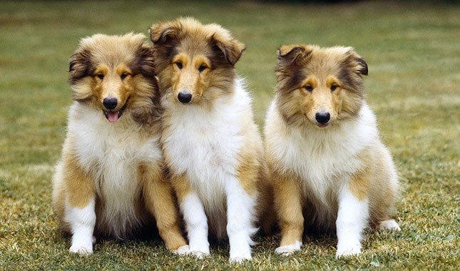Odorless Breeds Of Dog