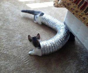 Tubular cats