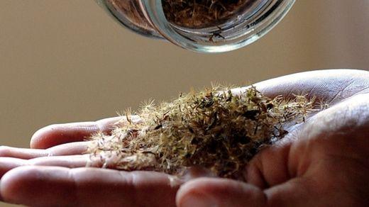 gerichtsurteil zu stevia pflanze bahn frei f r den gr nen s stoff gesundheit. Black Bedroom Furniture Sets. Home Design Ideas