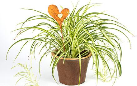 pflanzen reinigen die luft und verbessern die luftqualit t eines raumes erheblich gesundheit. Black Bedroom Furniture Sets. Home Design Ideas