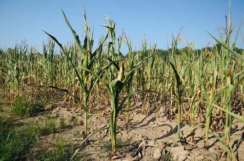 Gemeint war die seltsame Erfahrung, Stiegen die Getreidepreise – sie waren die entscheidende Messzahl im Leben der großen Mehrheit der Menschen.