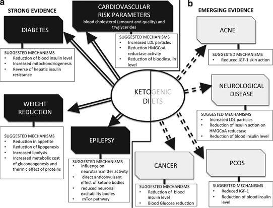 Vorteile und Kontraindikationen der ketogenen Ernährung